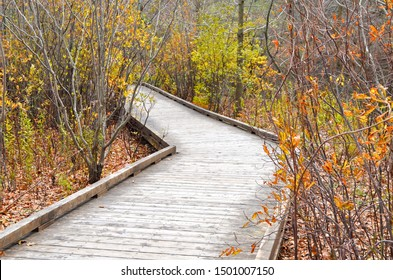 A boardwalk takes the viewer into a late fall wetland forest and makes a left turn, disappearing into the woods under an overcast sky.