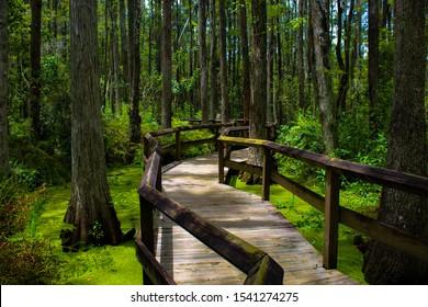 Boardwalk through Florida Everglades swamplands.
