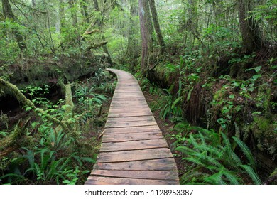 Boardwalk through old-growth temperate rainforest on Vancouver Island