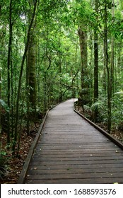 Boardwalk through rainforest Mary Cairncross Reserve