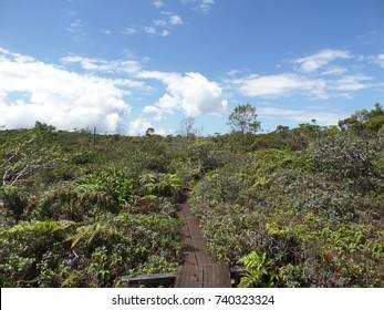 Boardwalk through a swamp, Kauai, Hawaii