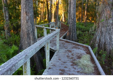 Boardwalk through the thick swamps of central Florida