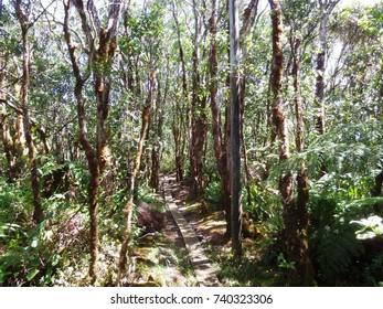 Boardwalk through trees in wetlands, Kauai, Hawaii