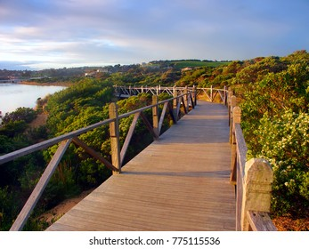 Boardwalk through vegetation along the coastline in Warrnambool Australia