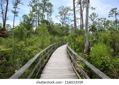 Boardwalk trail at Audubon Corkscrew Swamp Sanctuary in Naples, Florida, a 2 miles hike through pine flat woods and wet prairie ecosystems within the Sanctuary.