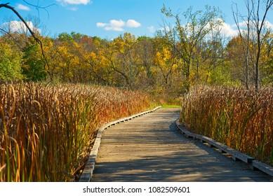 A boardwalk trail curves through tall grasses in an autumn meadow, Twinsburg Ohio