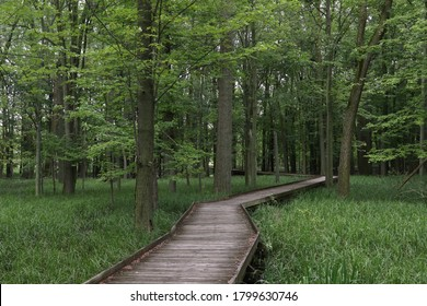 Boardwalk Trail at Maumee Bay State Park, Ohio
