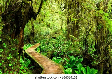 Boardwalk trail through the mossy rainforests of Pacific Rim National Park, Vancouver Island, BC, Canada