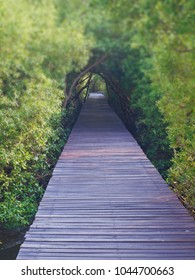Boardwalk underpass of trees to the otherworldly of deep forest, blurred trees tunnel with focus on front boardwalk.