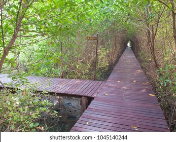 """Boardwalk underpass of trees to the otherworldly of deep forest, focus on boardwalk junction, text on the guide post mean """"trail no.2""""."""