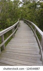 A boardwalk winding through a forest located near Cape Hatteras, NC