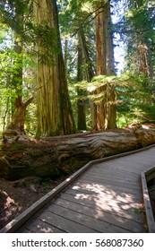Boardwalk in Woods, Mount Rainier National Park