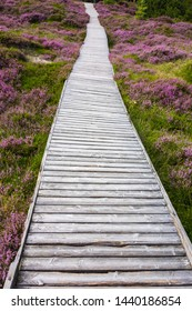 boardwalks on the island of Amrum in the North Sea