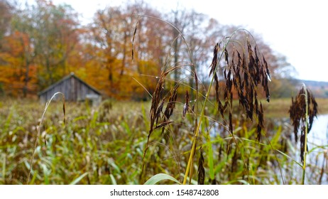 Boat house beside water surrounded by reeds and Autum trees