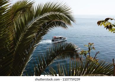 Boat on Blue Ocean Water, Palm Tree, Dubrovnik, Croatia