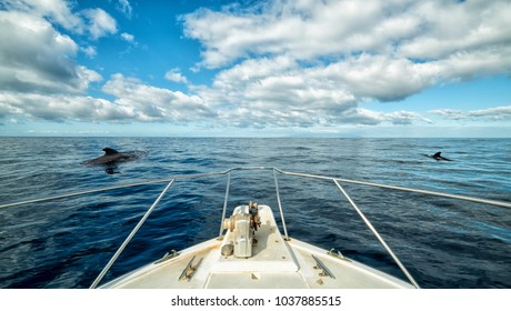 Boat trip with whales sighting