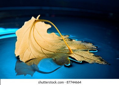 boat from yellow leaf on blue water