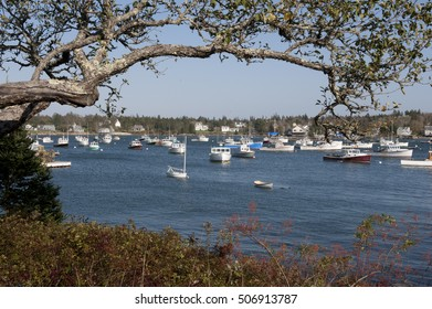 Boats fill the harbor of the Town of Bernard of The Acadia National Park, located in the State of Maine in the Country of USA. A limb of a tree frames the tranquil scene on October 15, 2012.