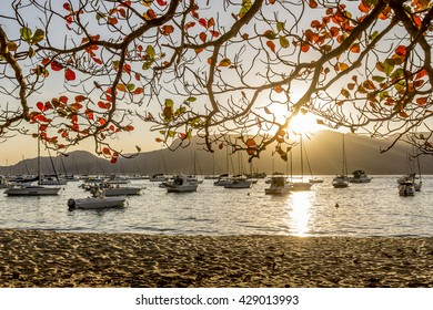 Boats at sunset in calm beach of Ilhabela Brazil