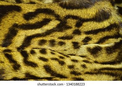 bobcat fur coat
