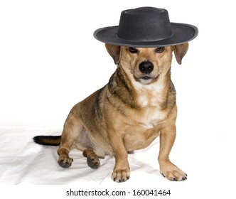 bobtail dog breed that makes the hat with spiteful