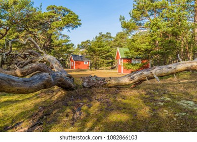 Boda coast eastern nature reserve on Oland, Sweden. Small red cabins among pine trees in the coastal forest. Fallen old pine in the foreground.