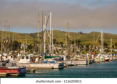 BODEGA BAY, CA/USA - MAY 18, 2018: Fishing boats and yachts share Spud Point Marina a short distance across Bodega Harbor from the scenic coastal town of Bodega Bay on a sunny afternoon in spring.