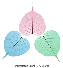 Bodhi leaves in red green blue colour