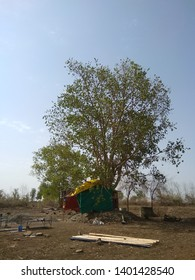 bodhi tree, bhante nivas, bhante live under bodhi tree, pipal tree, ficus religiiosa