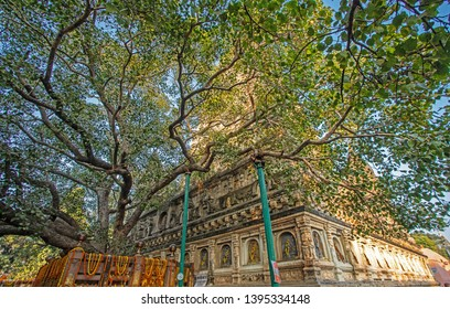 The Bodhi tree and the Mahabodhi temple complex were at Bodhgaya