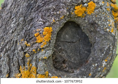 body of an almond tree