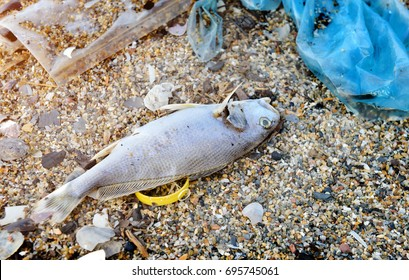 Body of death fish on the beach with plastic and junk in bad pollution photo in outdoor low lighting.