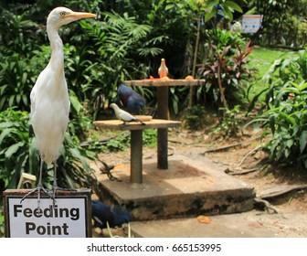 Bodyguard of the feeding point