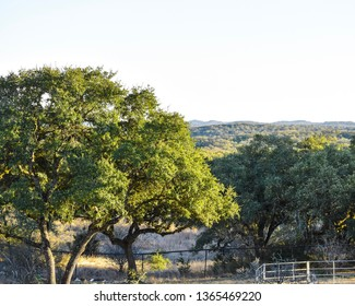 Boerne Texas Landscape