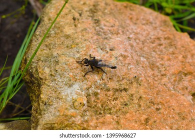 Boerne, Texas / United States - May 12 2019. Photos of various species of fauna in Natural environment.