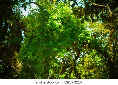 Boerne, Texas / United states - May12 2019: Photos of forest streams, plant life, and interesting settings.