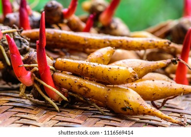 FRESH 3 rhizomes// Fingerroot Boesenbergia rotunda Thai herbs