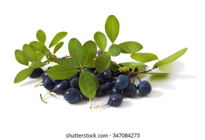 bog bilberry with leaves on a white background ( Vaccinium uliginosum )