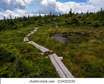 Bog boards through alpine mountain environment, along the Appalachian Trail in Maine.