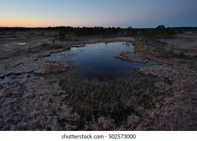 Bog at dawn, frozen bog pool. Wetland before sunrise.