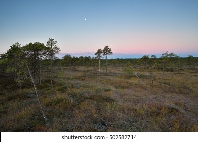 Bog landscape with a moon, before sunrise, autumn morning.