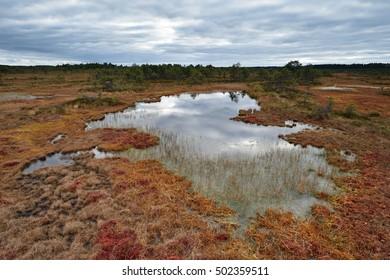 Bog landscape with pools in the autumn, cloudy sky, Kakerdaja bog, Estonia.