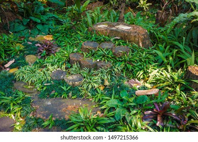 BOGOR, INDONESIA - AUGUST 21 2018 rotten wood path walk or pathway on the ground with cutted wood with green grass on indonesia - photo
