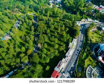 Bogor, Indonesia - October 17, 2018: Aerial View of a Road Splits Across the Green Lush Gunung Mas Tea Plantation, Puncak Pass, West Java,