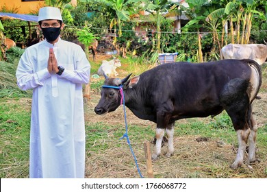 bogor, indonesia on june 29, 2020: portrait of moslem asian man wearing facial mask with cow for Idul Adha qurban celebration