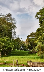 BOGOTA, COLOMBIA - FEBRUARY 6, 2014: Beautiful forest in the Simon Bolivar Park, and an airplane crossing the sky above it.