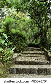 BOGOTA, COLOMBIA - JANUARY 25, 2014: The garden of the Quinta de Bolivar, in Bogota.