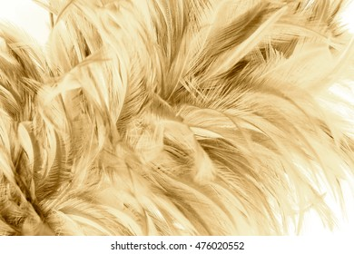 Bohemian boho style vintage color trends ,Chicken feather texture background