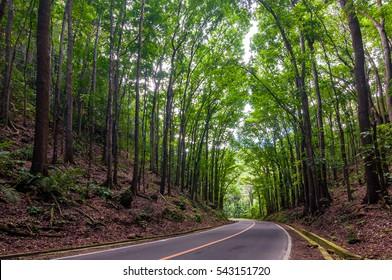 The Bohol Man-Made is a mahogany forest stretching in a 2km stretch of densely planted with Mahogany trees located in the border of Loboc and Bilar towns.