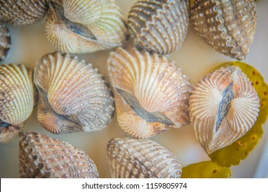 Boiled blood clams on white dish background. Steamed cockles frame with herb. Blood cockles or blood clams (Tegillarca granosa) background for seafood concept.